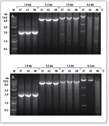 Protoscript II Reverse Transcriptase performs as well as other RNase H– Reverse Transcriptases
