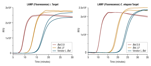 Rapid LAMP Detection