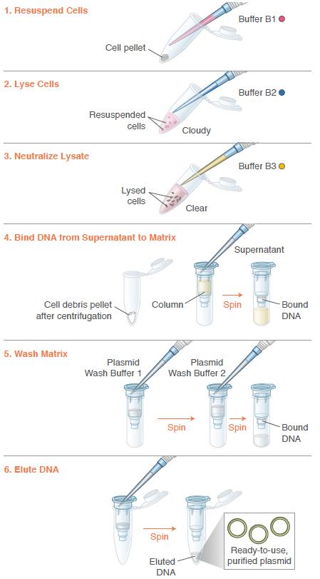 Monarch Plasmid Miniprep Kit Protocol